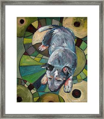Australian Cattle Dog Nap Time Framed Print