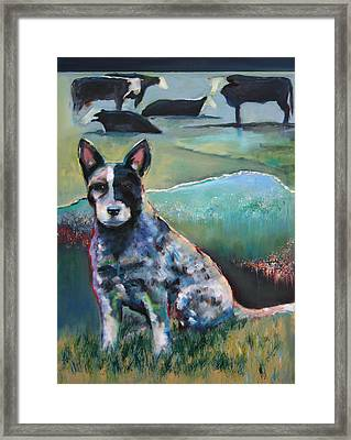 Australian Cattle Dog With Coat Of Many Colors Framed Print