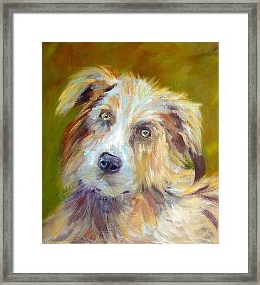 Framed Print featuring the painting Australian Shepherd by Carol Berning
