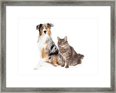 Australian Shepherd Dog And Tabby Cat Framed Print by Susan Schmitz
