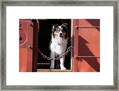 Australian Shepherd In A Train Car (mr Framed Print by Zandria Muench Beraldo