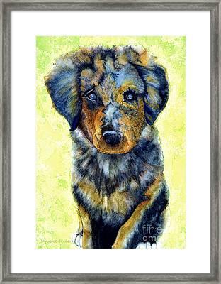 Australian Shepherd Puppy Framed Print by Janine Riley