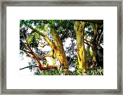 Australian Trees Framed Print by John Potts