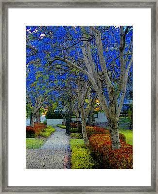 Australia's Blue Blossoms Framed Print by Lenore Senior and Constance Widen