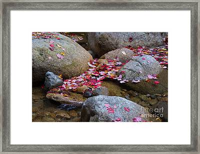 Autmun Leaves Framed Print