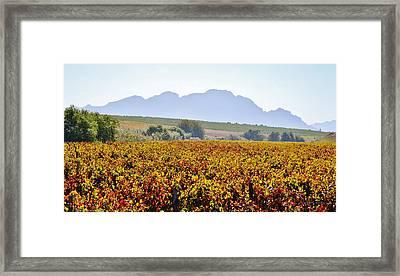Autum Wine Field Framed Print by Werner Lehmann