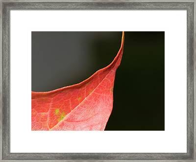 Framed Print featuring the photograph Autumn 2 by Tara Lynn