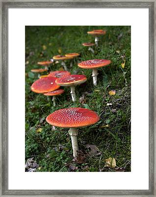 Autumn 2013 Framed Print by Frits Selier