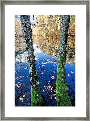Autumn - 7 Framed Print by Okan YILMAZ