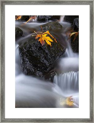 Autumn Above And Below Framed Print