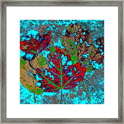 Autumn Abstract Framed Print by David Patterson