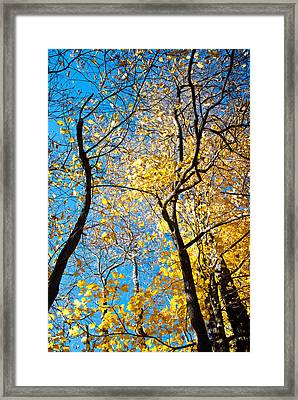 Autumn Abstract Framed Print by Jeanne Sheridan