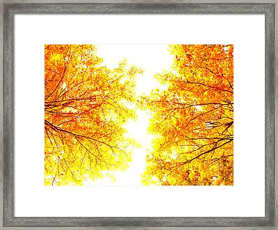 Autumn Abstract Framed Print by Tim Good