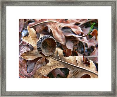 Autumn Acorn And Oak Leaves Framed Print by Jennie Marie Schell