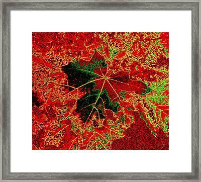 Autumn All Ablaze Framed Print