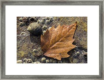 Autumn Along The Coast Framed Print by Andrew Pacheco