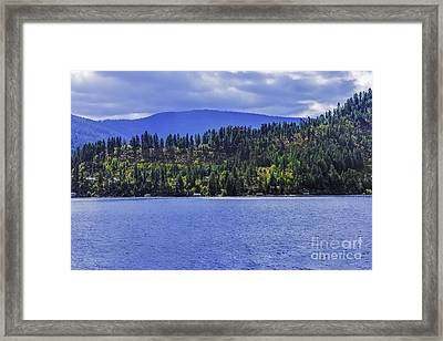 Autumn Among The Pines Framed Print by Nancy Marie Ricketts