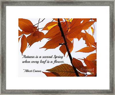Autumn Framed Print by Anne McDonald