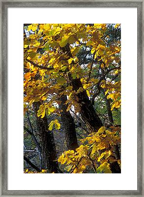 Autumn Framed Print by Anonymous