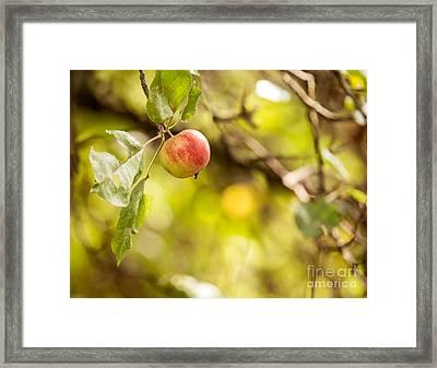 Autumn Apple Framed Print