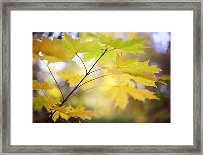Autumn Aquarel Framed Print