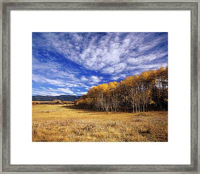 Autumn Aspens And Old Barn On Ranchland Framed Print by Chuck Haney