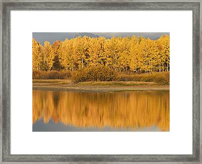Autumn Aspens Reflected In Snake River Framed Print by David Ponton