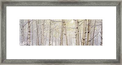 Autumn Aspens With Snow, Colorado, Usa Framed Print by Panoramic Images