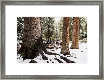Autumn At Gore Creek 5 - Vail Colorado Framed Print by Brian Harig