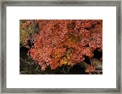 Autumn At Suttle Lake Framed Print