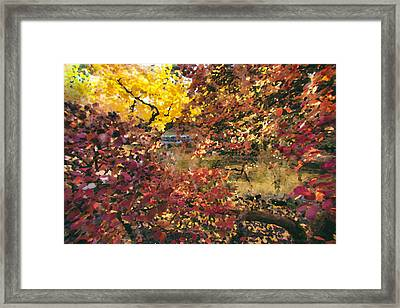 Autumn At The Park Framed Print by Carrie Cole