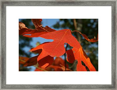 Framed Print featuring the photograph Autumn Attention by Neal Eslinger