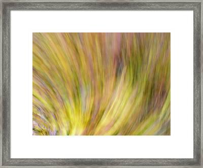 Autumn Azaleas 4 Framed Print