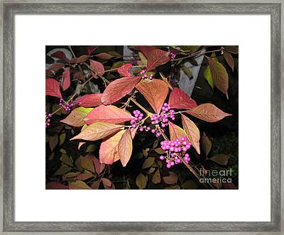 Autumn Beauty Berry Framed Print by Marlene Rose Besso