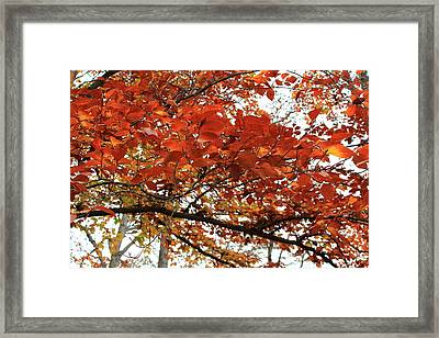 Framed Print featuring the photograph Autumn Beauty by Candice Trimble