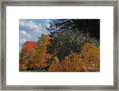 Autumn Beauty Framed Print by Judy Wolinsky