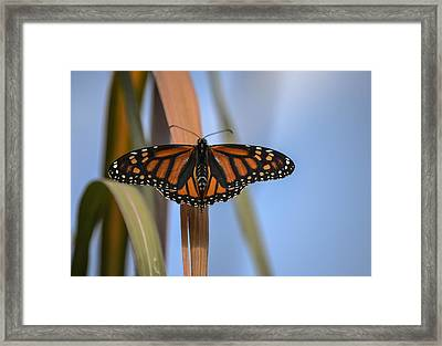 Autumn Beauty- Limited Edition 3 Of 10 Framed Print