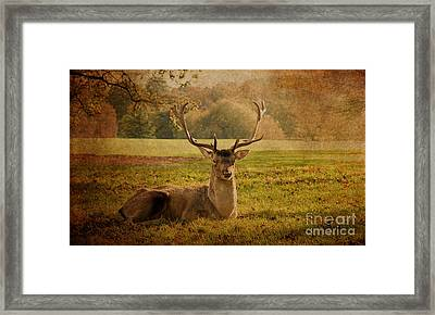 Autumnal Beauty. Framed Print by ShabbyChic fine art Photography