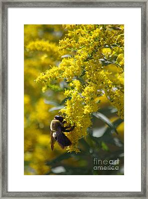 Autumn Bee Framed Print by Tannis  Baldwin