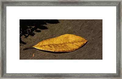 Autumn Begins Framed Print by Kathi Isserman