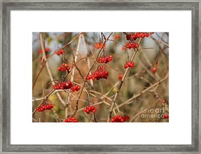Autumn Berries Framed Print by Carol Lynch