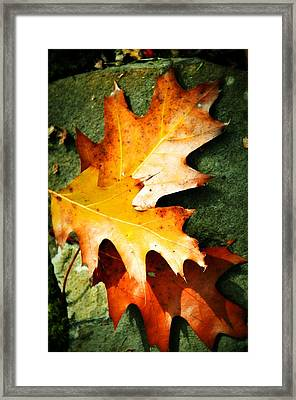 Autumn Blaze Framed Print by JAMART Photography