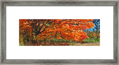 Autumn Blaze Panorama Framed Print by Christopher Arndt