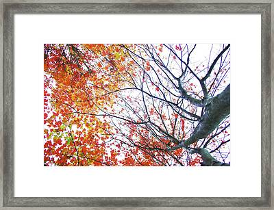 Autumn Bleeds Framed Print