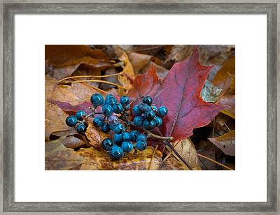 Autumn Blues Framed Print by Bill Pevlor