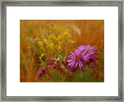 Autumn Blush Framed Print by Tim Good