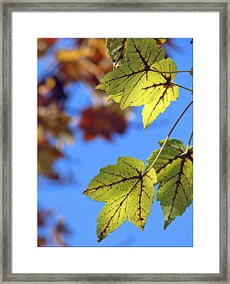 Autumn Bokeh  Framed Print by Chris Anderson