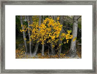 Autumn Breakout Framed Print