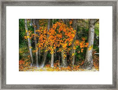 Autumn Breakout No.2 Framed Print