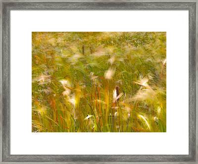 Autumn Breezes 2 Framed Print by Leland D Howard
